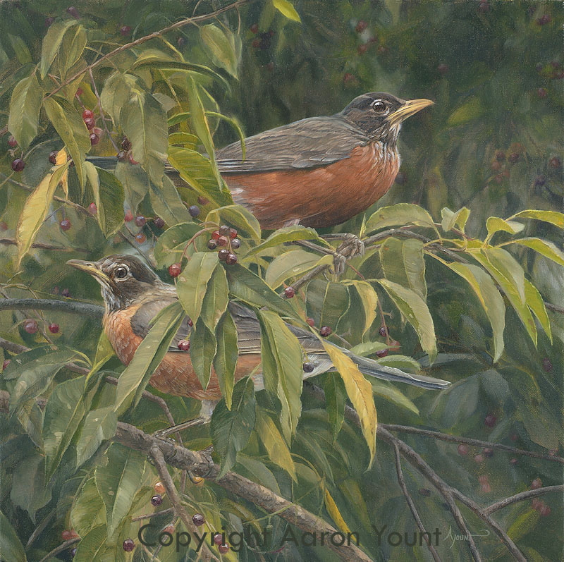 American Robins Greenwich Workshop