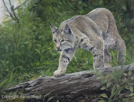 Bobcat by Aaron Yount