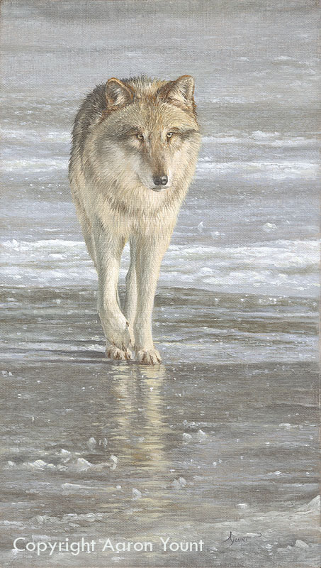 Wolf Awareness Week Poster Winner Aaron Yount