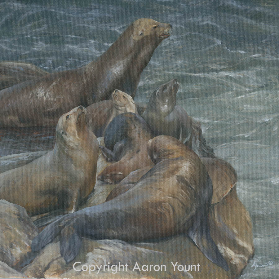 Sea Lions Aaron Yount
